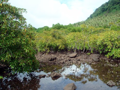 Mangroves near marine park - Courtesy of www.comfsm.fm